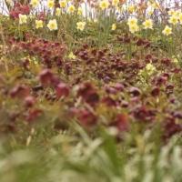 Garden Views 2011