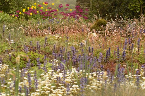 Terrace garden 07/05/11