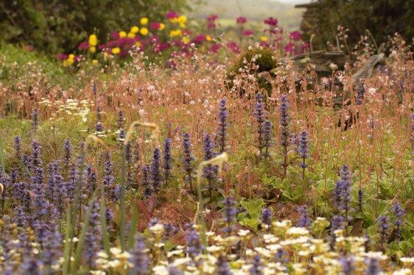 Terrace garden 15/05/11