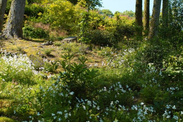 Copse with white Violas 2/07/11