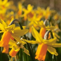The Value of Bees; Peter's Leeks and Daffodils; and Where Were You When the Slam was Won?