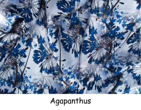 Agapanthus - blue (2)
