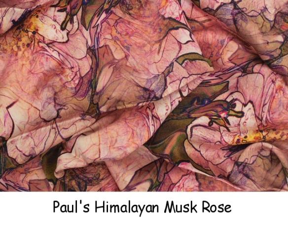 Pauls Himalayan Musk Rose