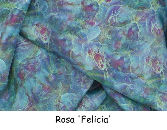 Rosa Felicia