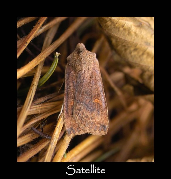 L Satellite