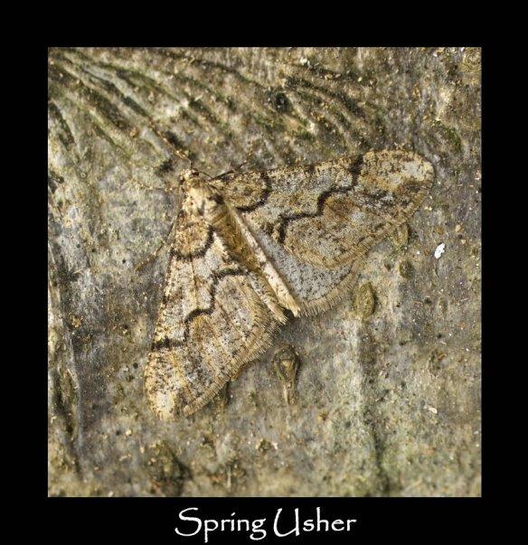 L Spring Usher