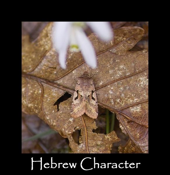 M Hebrew Character