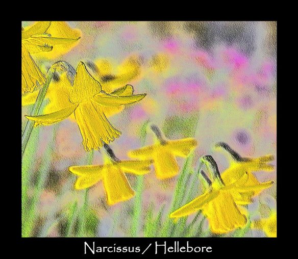 T aa 2Narcissus