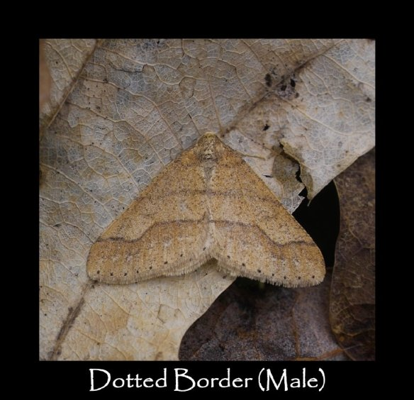 L Dotted Border (Male)