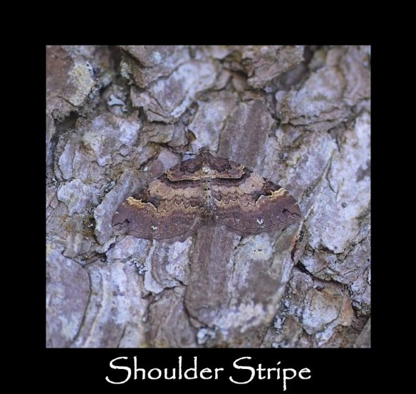 M Shoulder Stripe (2)