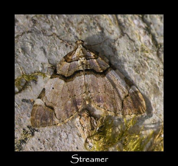M Streamer