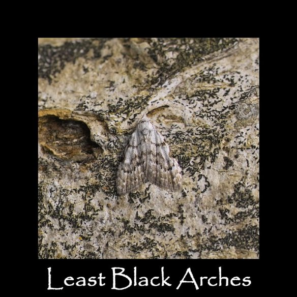 S Least Black Arches