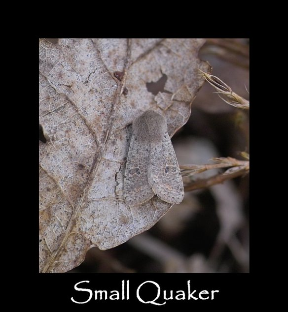 S Small Quaker