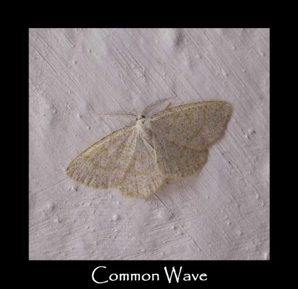L Common Wave
