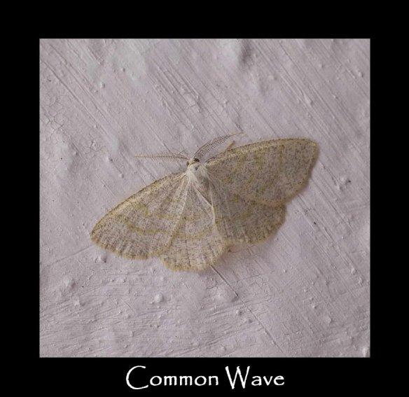 L Common Wave