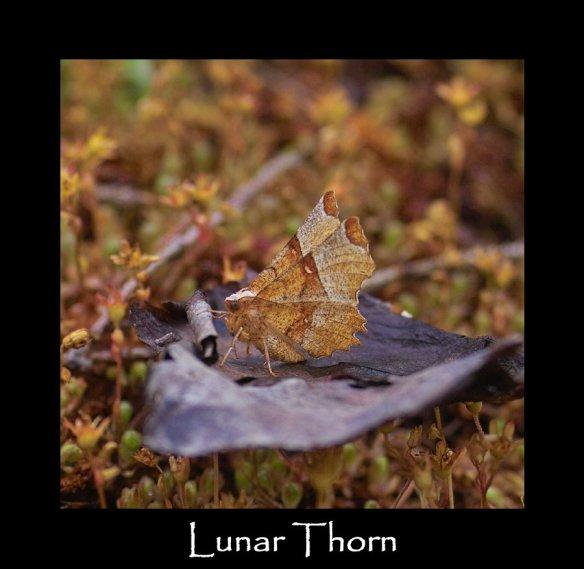 L Lunar Thorn