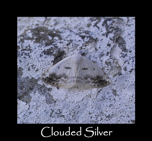 M Clouded Silver 2