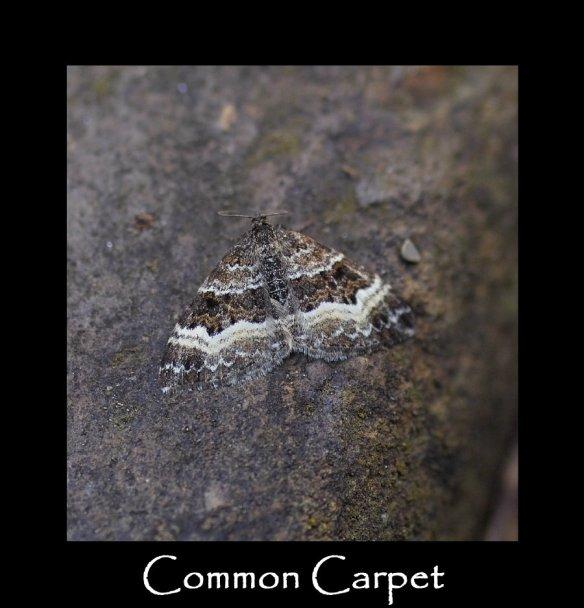 M Common Carpet