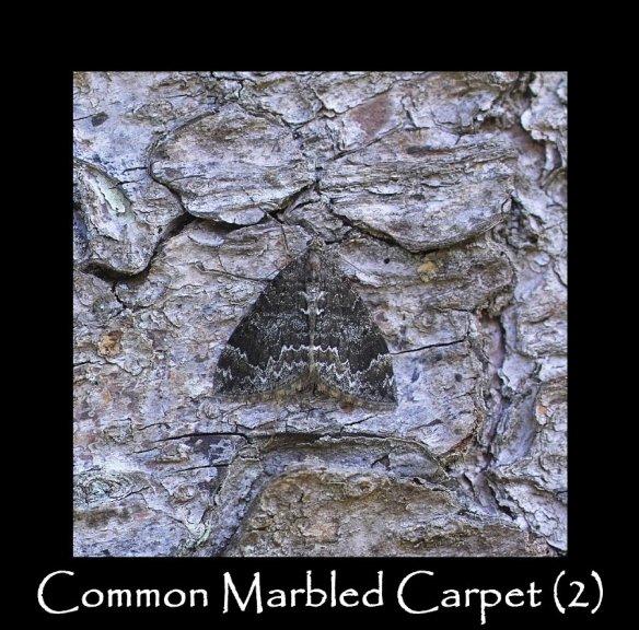 M Common Marbled Carpet (2)