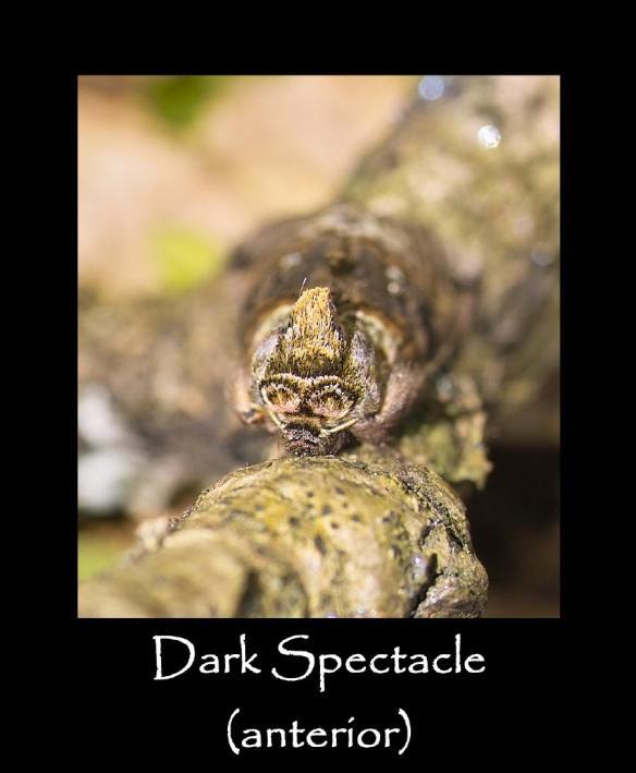 M Dark Spectacle (anterior)