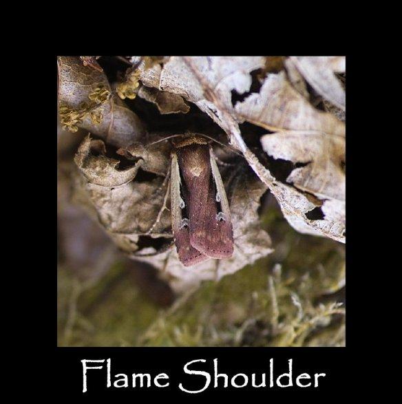 M Flame Shoulder