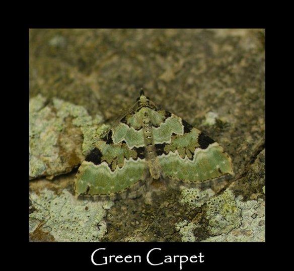M Green Carpet