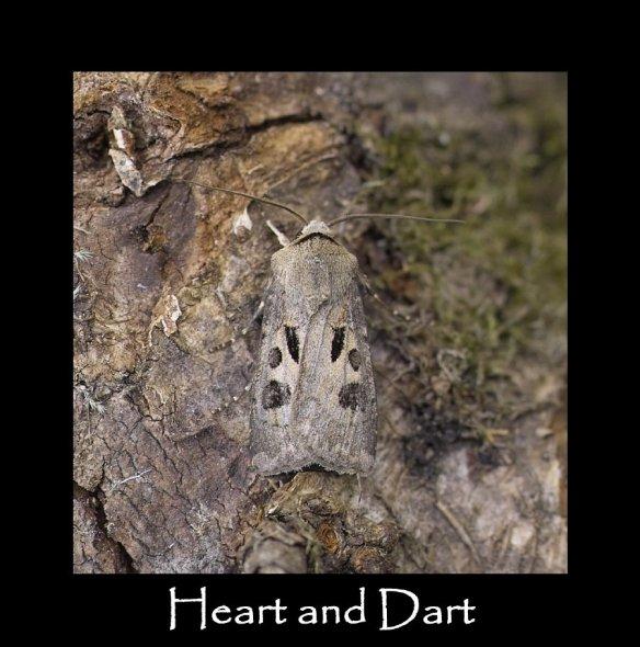 M Heart and Dart
