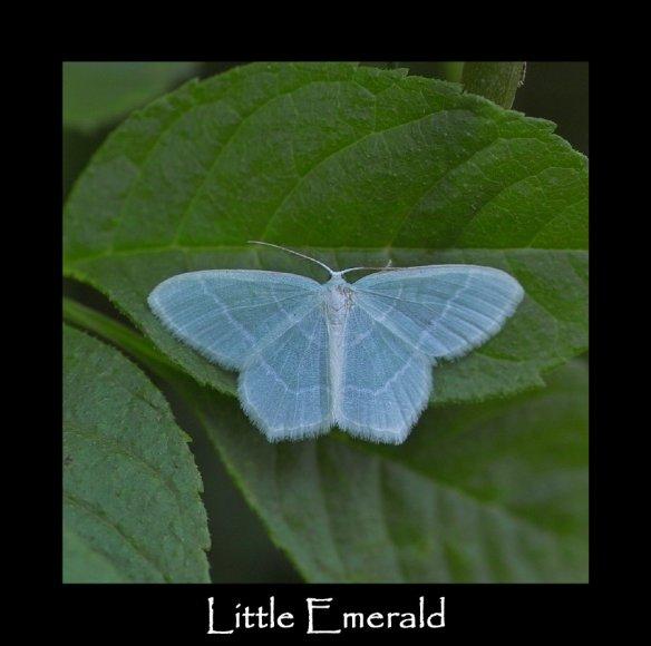 M Little Emerald