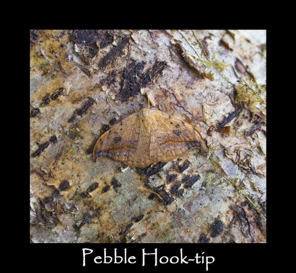 M Pebble Hook-tip