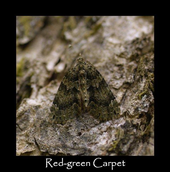 M Red-green Carpet