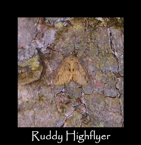 M Ruddy Highflyer