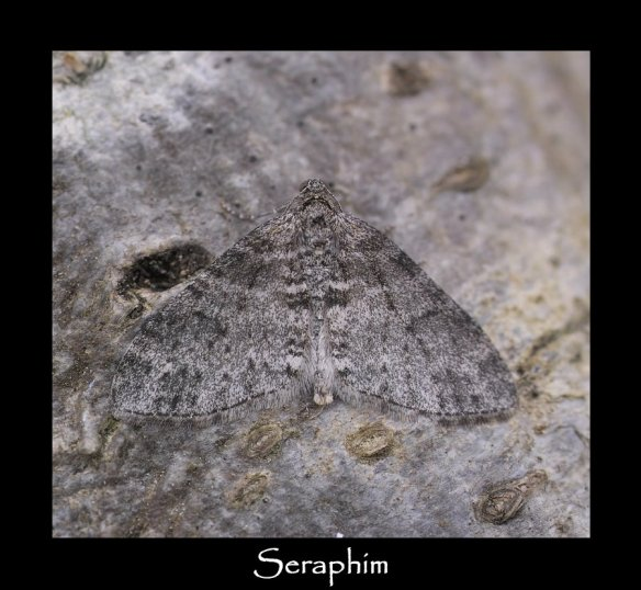 M Seraphim