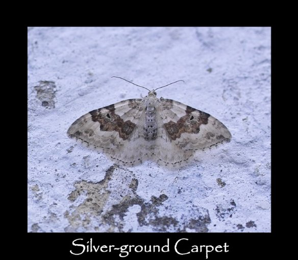 M Silver-ground Carpet (2)