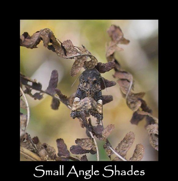M Small Angle Shades