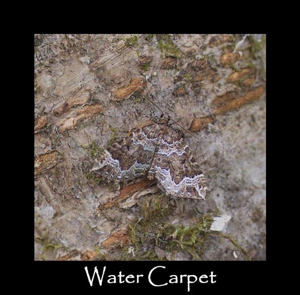 M Water Carpet
