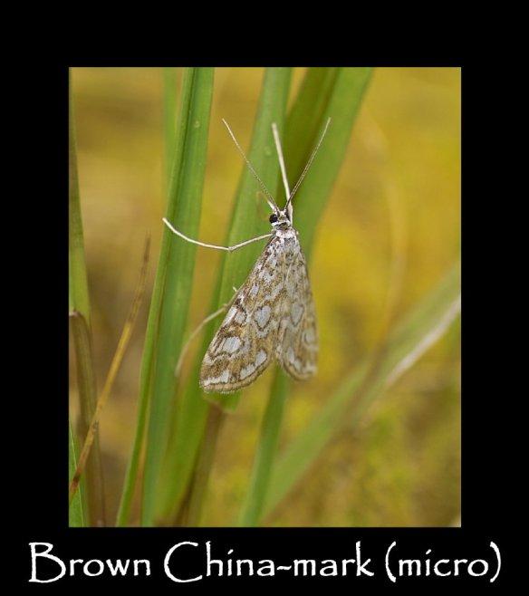 S Brown China-mark (micro)
