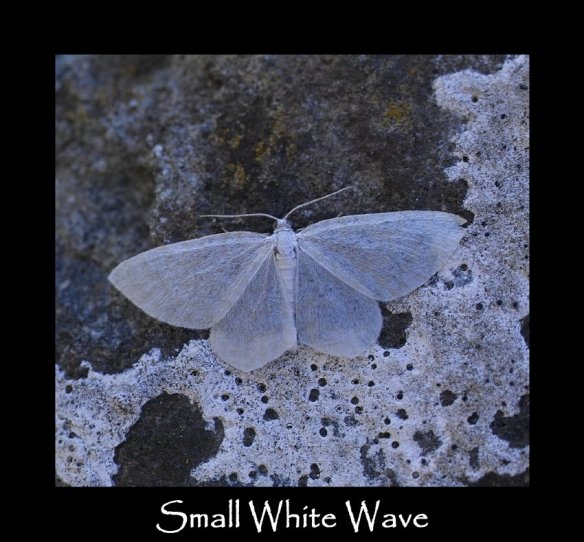 S Small White Wave