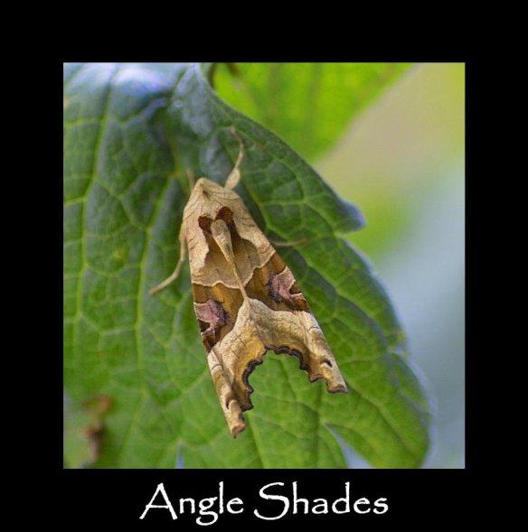 L Angle Shades (2)