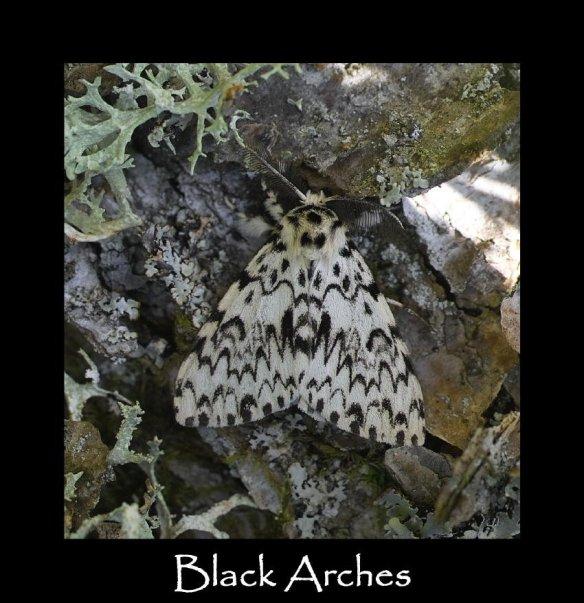 L Black Arches (2)