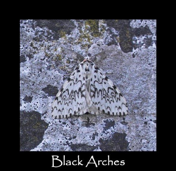 L Black Arches 2