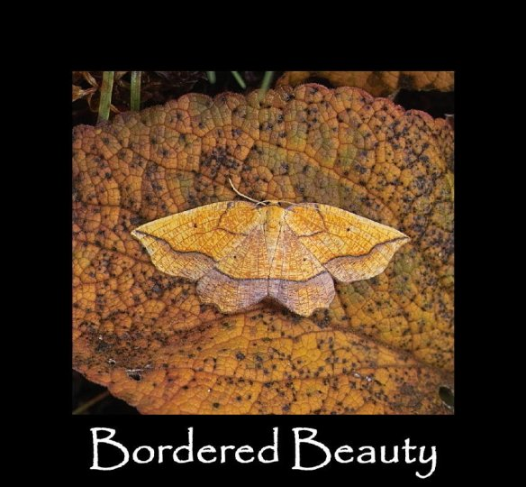 L Bordered Beauty (2)
