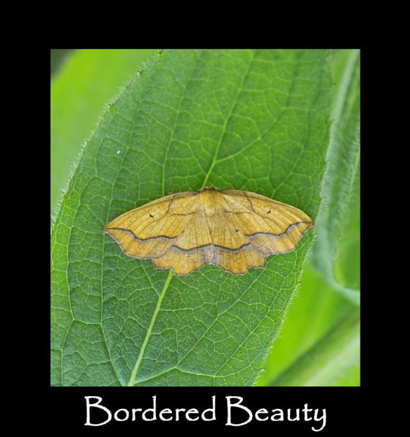 L Bordered Beauty