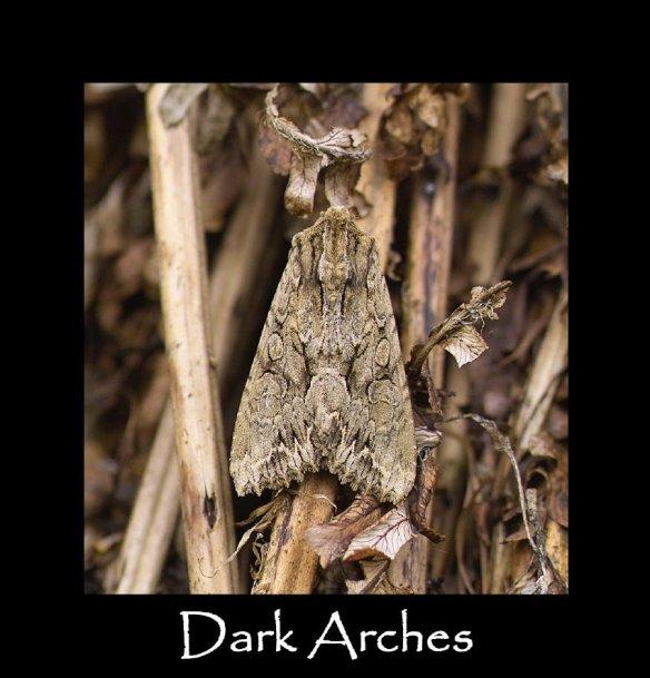 L Dark Arches (2)