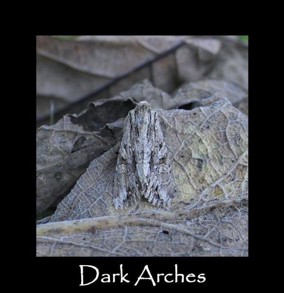 L Dark Arches
