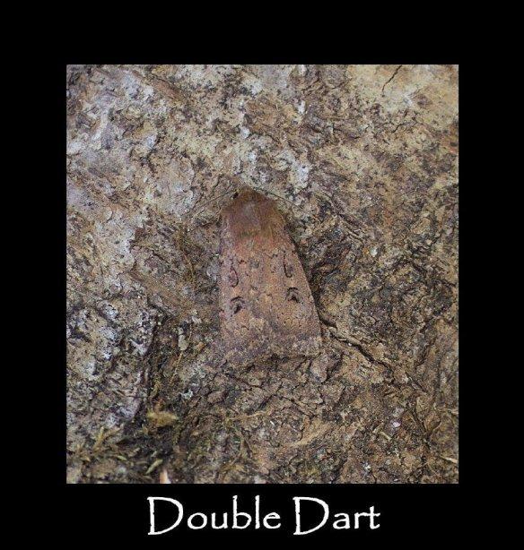 L Double Dart