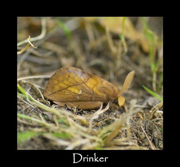 L Drinker (M) (2)