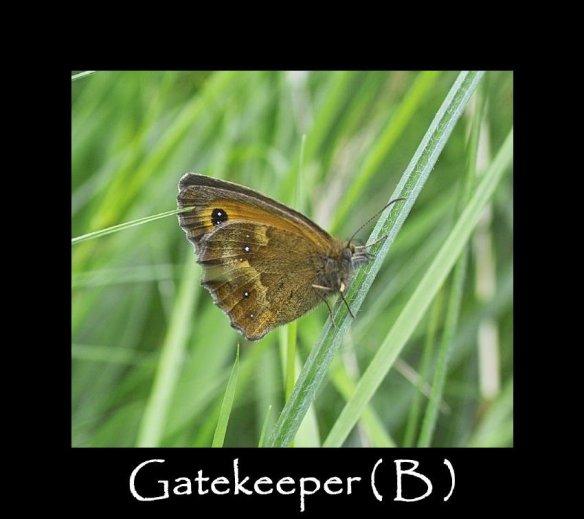 L Gatekeeper ( B ) 2 (2)