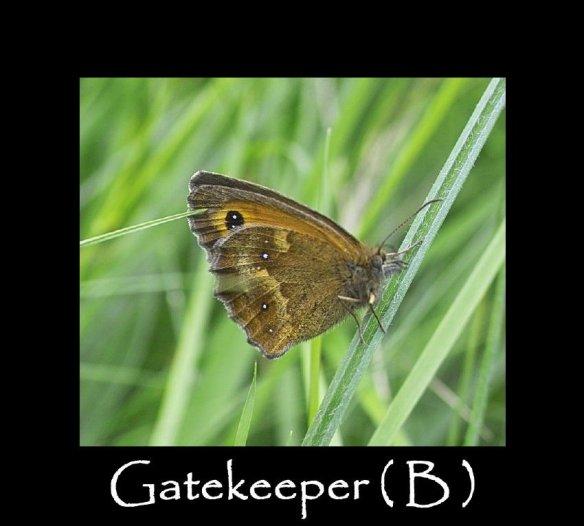 L Gatekeeper ( B ) 2