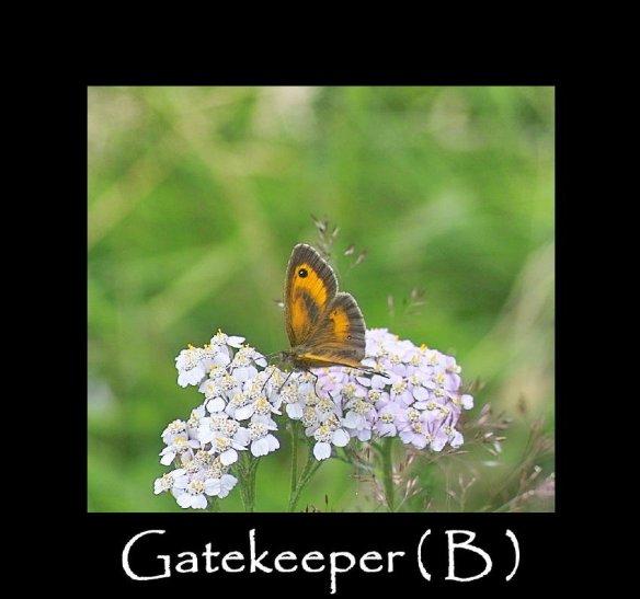 L Gatekeeper ( B ) (2)