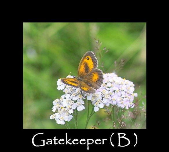 L Gatekeeper ( B )